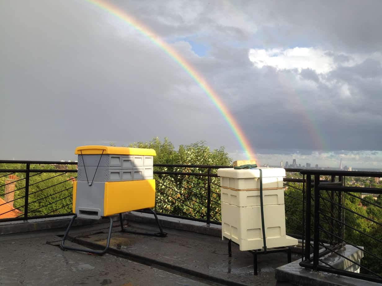 We Have 300,000 Honey Bees On Our Roof!