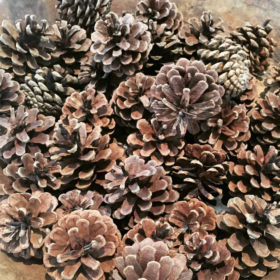 Pinecone Fire Starters make a wonderful homemade Christmas gift. Perfect as a decorative item too! Photo by the International Elf Service